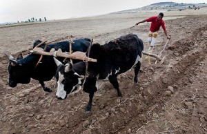 http://confrontingissues.com/wp-content/uploads/2014/02/man-plowing-field-_daleyphoto_ethiopia_14-300x194.jpg